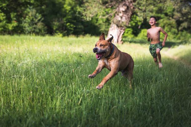 Boy have fun with his dog picture id1156466432?b=1&k=6&m=1156466432&s=612x612&w=0&h=ivettj4i0pgk usua9wlm52hxwu0zt7oul9hbhbcsiu=