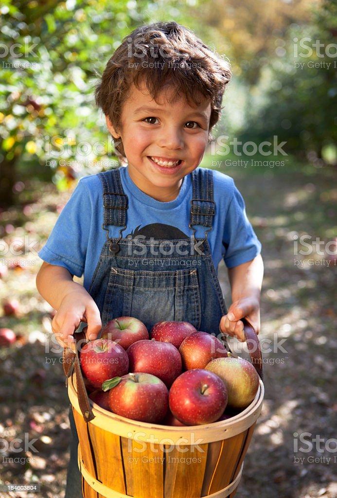 Boy holding a basket of freshly picked Minnesota apples royalty-free stock photo