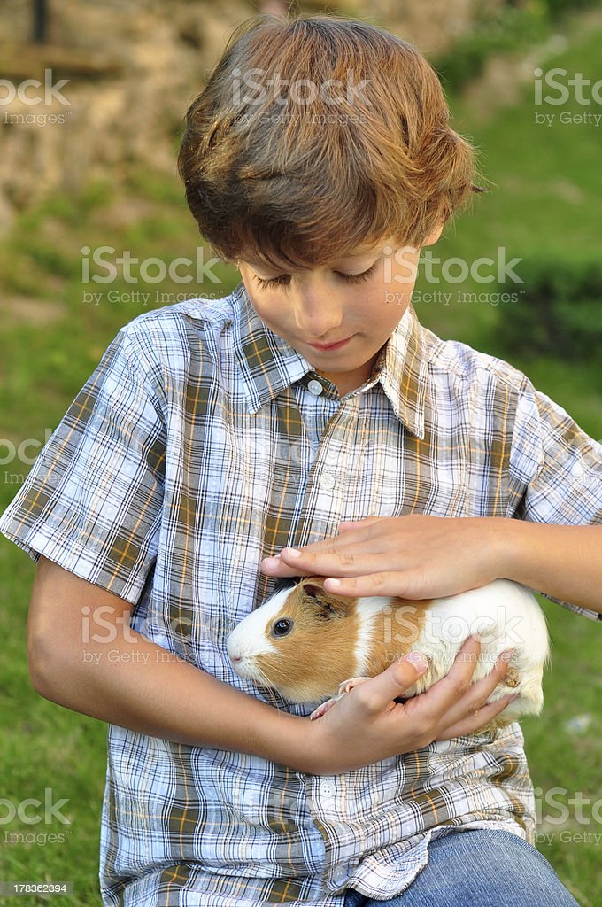 Boy holding a guinea pig stock photo