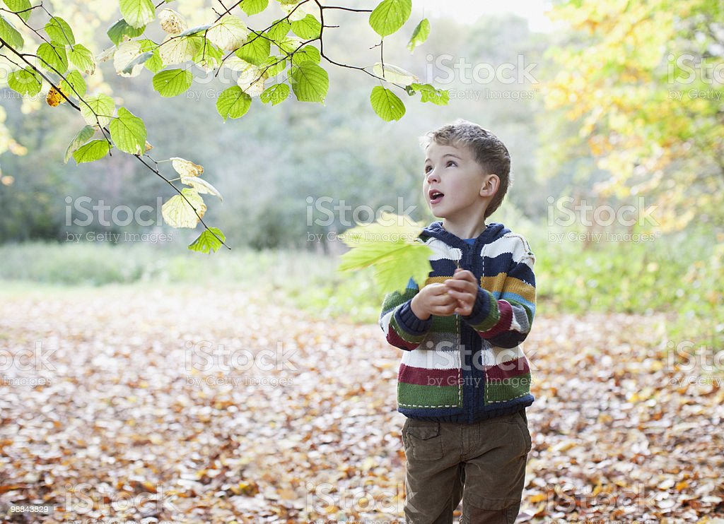 Boy holding autumn leaf royalty-free stock photo