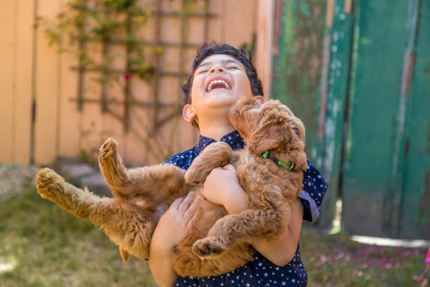 Boy Holding Goldendoodle Outdoors in Front Yard stock photo