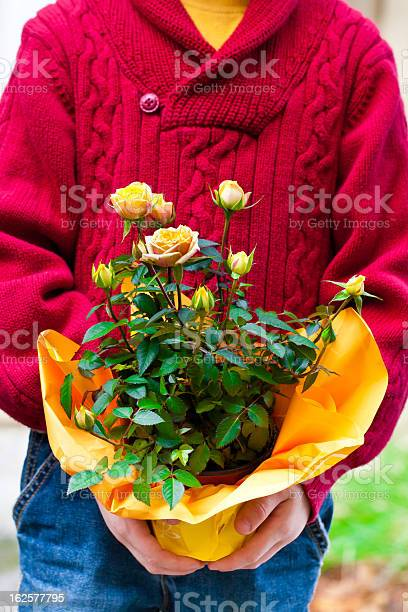 Boy Holding Potted Rose Flowers Stock Photo - Download Image Now
