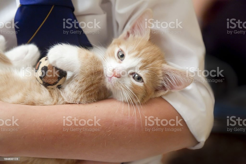 Boy holding small ginger and white kitten looking at camera stock photo