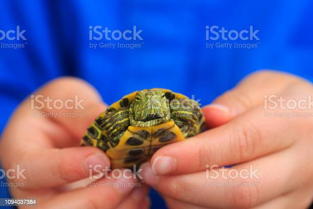 Boy holding turtle picture id1094037384?b=1&k=6&m=1094037384&s=612x612&h=rdwjwxjrcflzinuqrdhrnx 11jdvwuh011frwizprma=