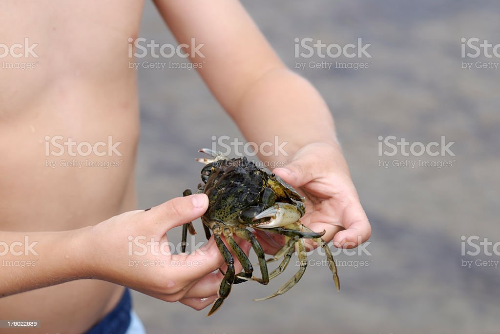 Boy holding two crabs royalty-free stock photo