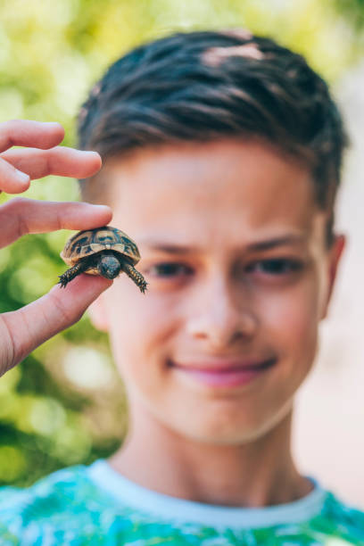 a boy holds baby turtles in his hands - lepro stock pictures, royalty-free photos & images