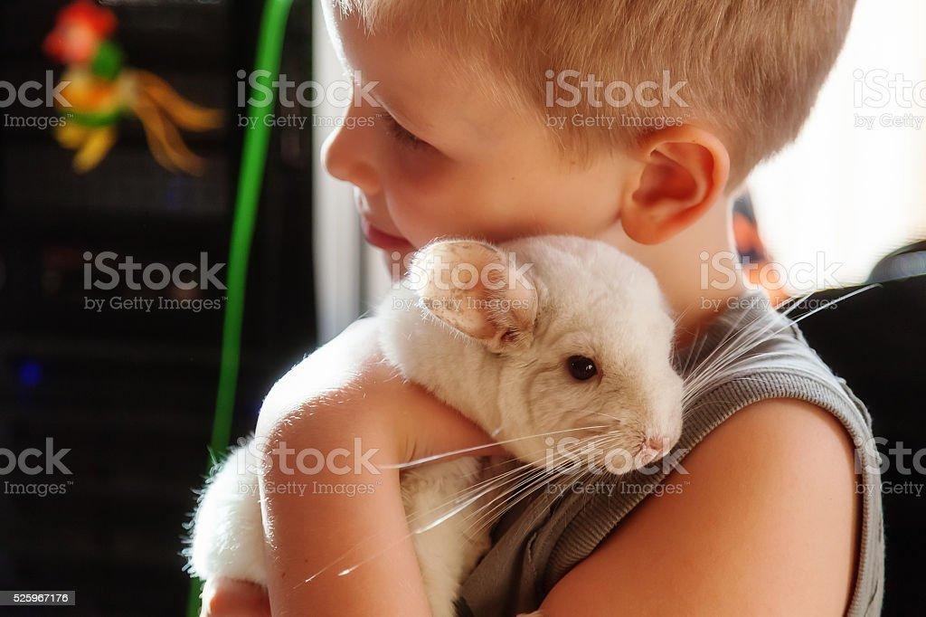 Boy hugging a white chinchilla Boy hugging a white chinchilla Animal Stock Photo