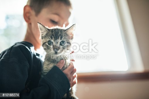 A child hugs an eight week old cat in front of a brightly lit window, enjoying the company of having a pet as well as learning the responsibility of animal care.  Horizontal image with copy space.