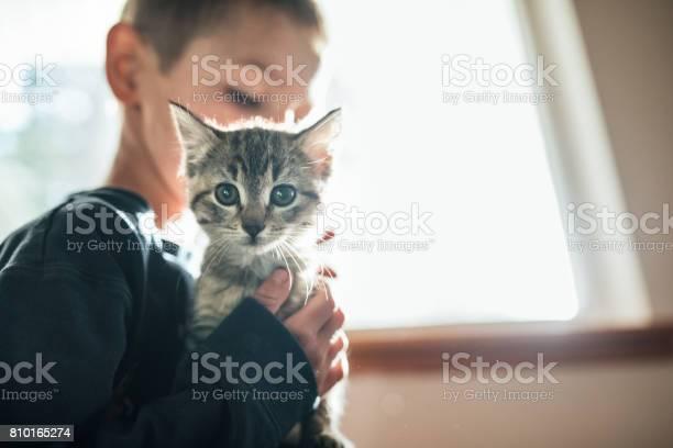 Boy hugging kitten picture id810165274?b=1&k=6&m=810165274&s=612x612&h=kamckksws 7 hznbvrsnj k1aayqt lxyvf5ulq6lwu=