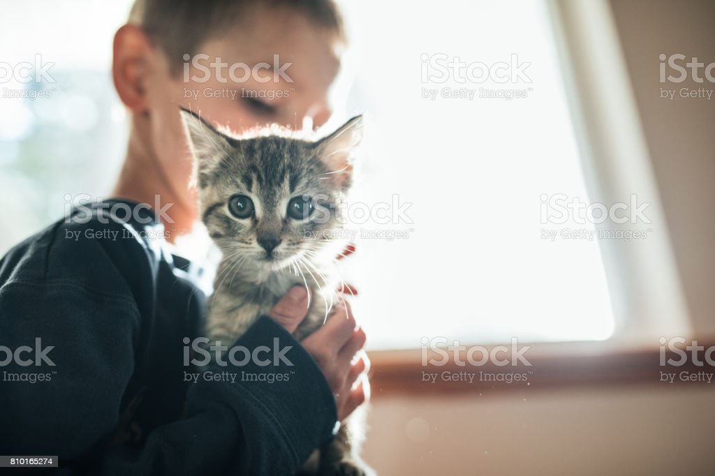 Niño abrazando gatito - foto de stock