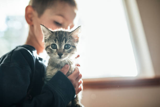 boy hugging kitten - kitten stock photos and pictures