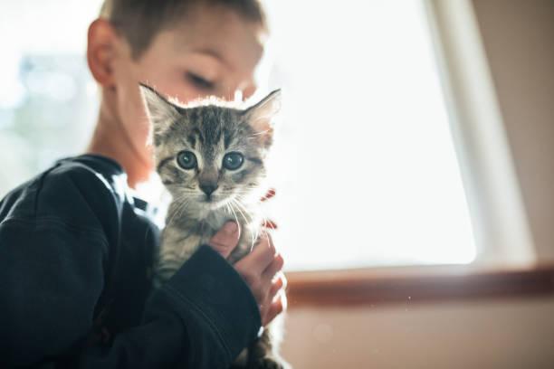 Boy Hugging Kitten stock photo