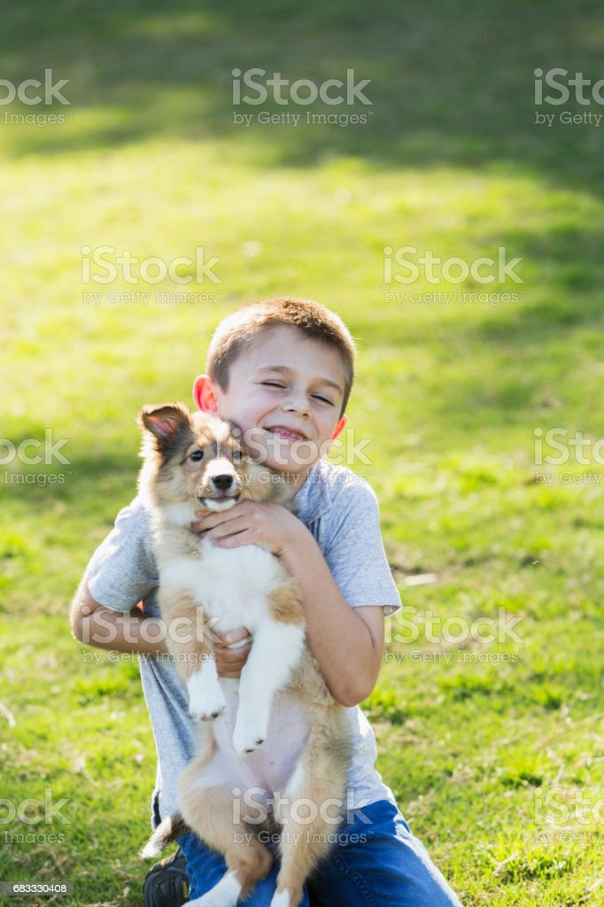 Boy hugging sheltie puppy foto stock royalty-free
