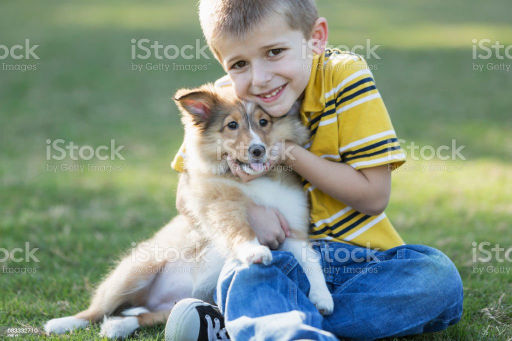 Boy hugging sheltie puppy royalty-free stock photo
