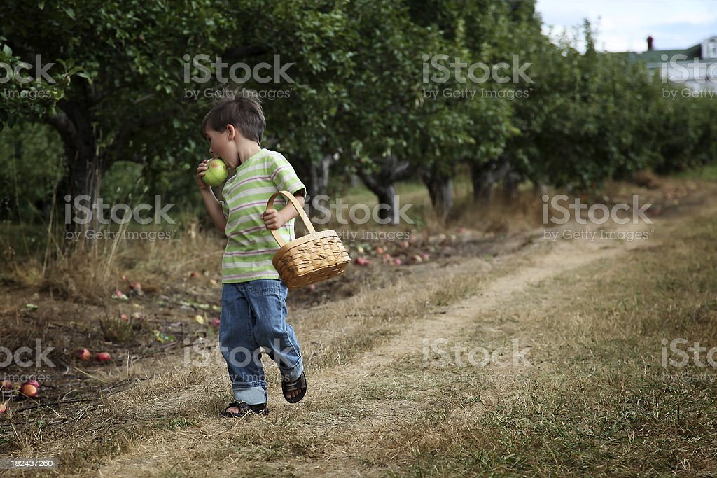 Boy in an orchard royalty-free stock photo