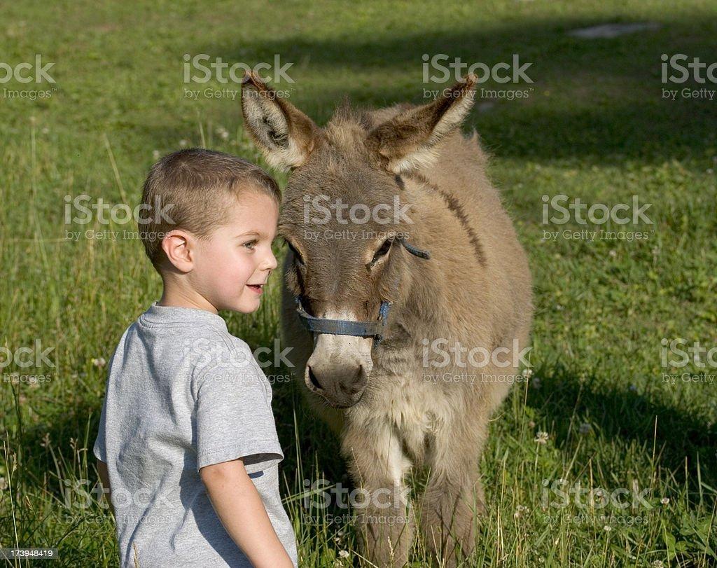 Ragazzo In campo con Burro a pelo lungo - foto stock
