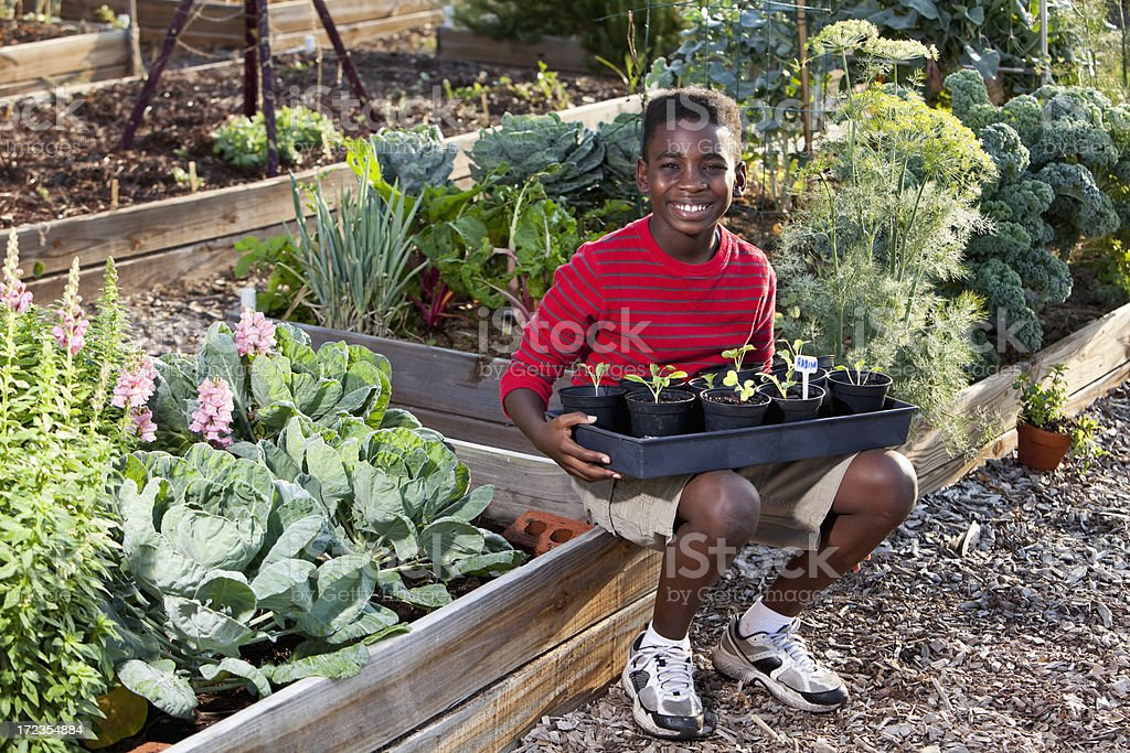 Boy in garden con seedlings foto de stock libre de derechos