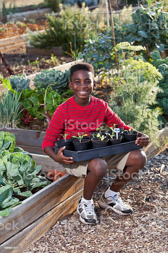 Boy in garden with seedlings stock photo