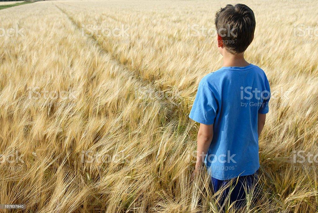 Boy in golden barley field - Royalty-free 10-11 Years Stock Photo