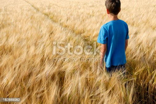 istock Boy in golden barley field 182889082
