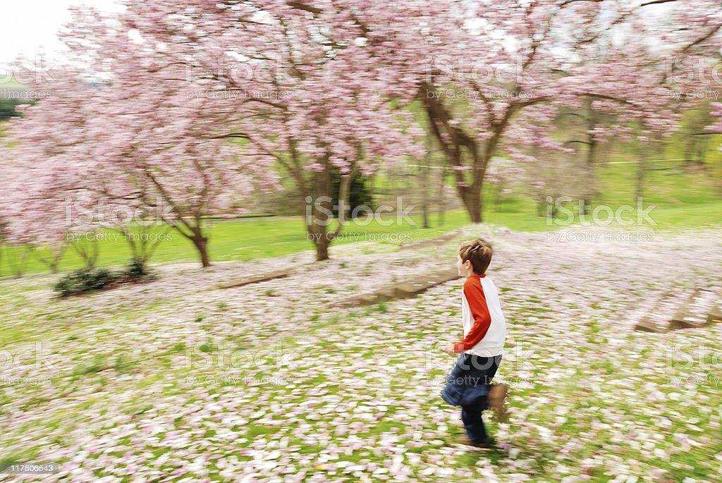 Boy in magnolia grove royalty-free stock photo