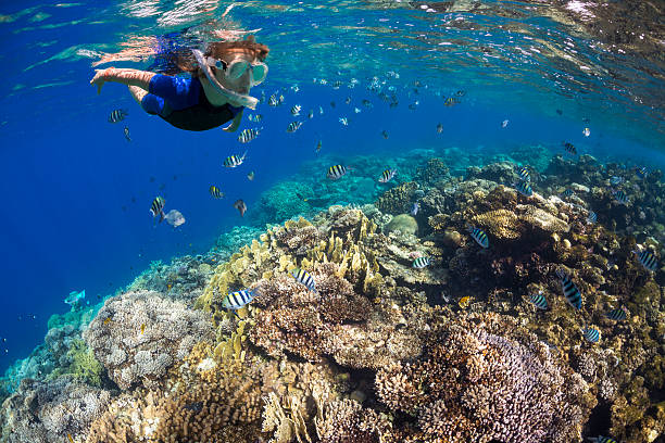 Boy in the land of fish Child snorkeling over colorful coral reef snorkel stock pictures, royalty-free photos & images