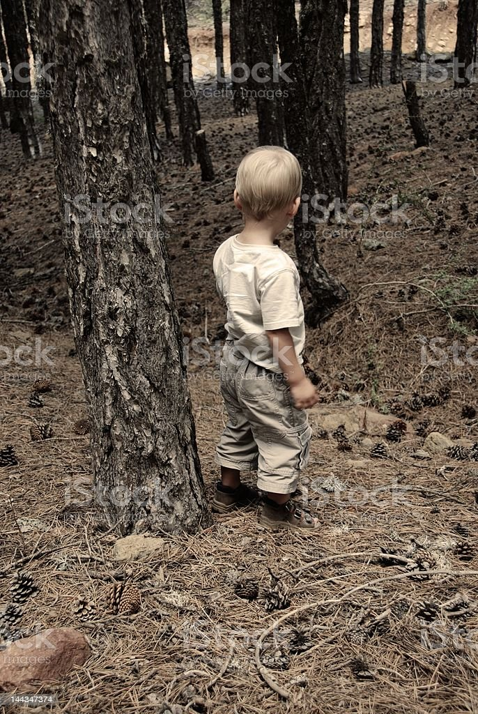 Boy in the Woods royalty-free stock photo