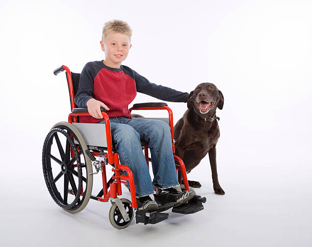 Boy in Wheelchair with Dog stock photo