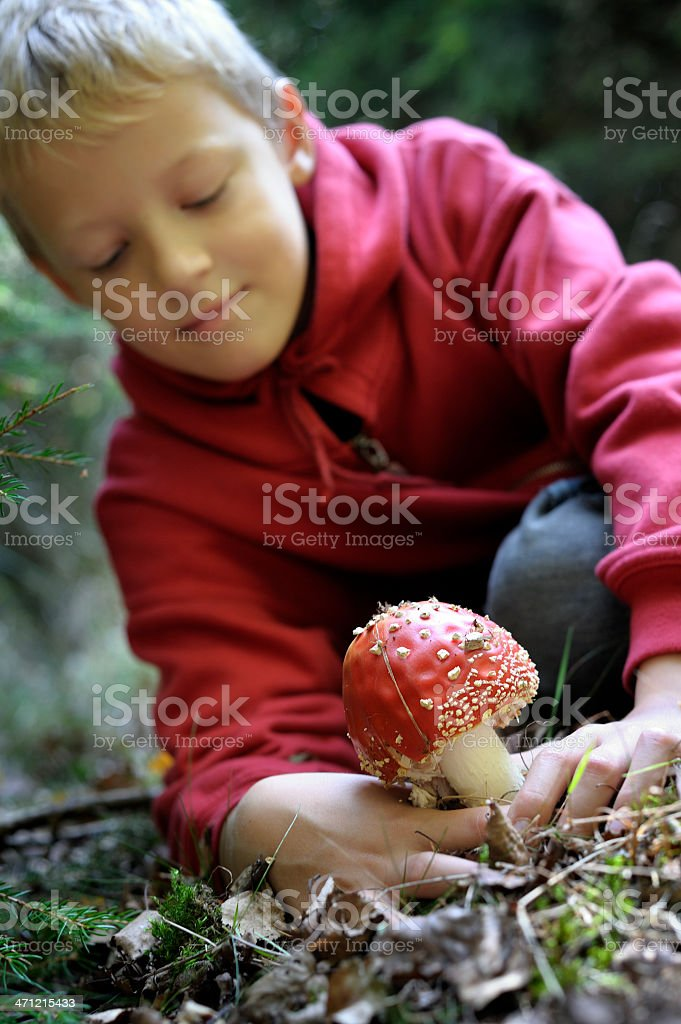Boy is picking a poisonous mushroom stock photo