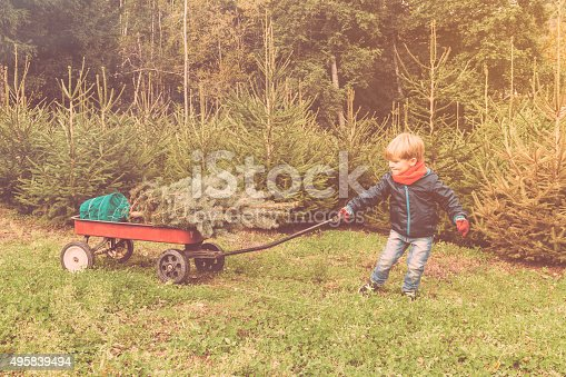 Young boy  in a grove of firs.  He is bringing the christmas tree at home pulling a handcart.