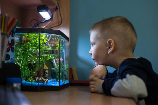 boy is watching fish tank in his room - home aquarium stock photos and pictures