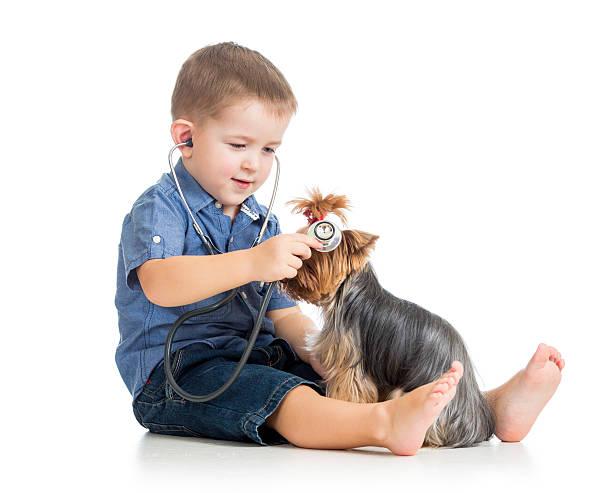 boy kid examining dog stock photo