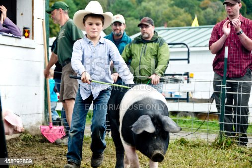Tunbridge, VT, USA - September 14, 2013: A boy in a cowboy hat expertly leads his saddleback hog across the green at the Tunbridge Fair swine show.