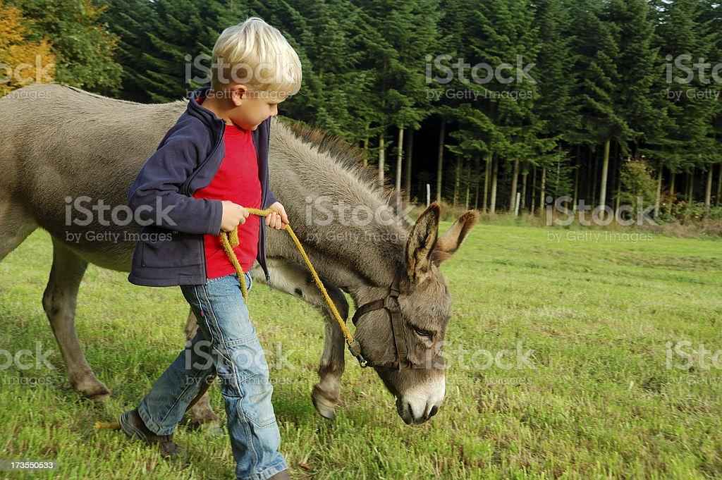 Ragazzo guida un asino - foto stock