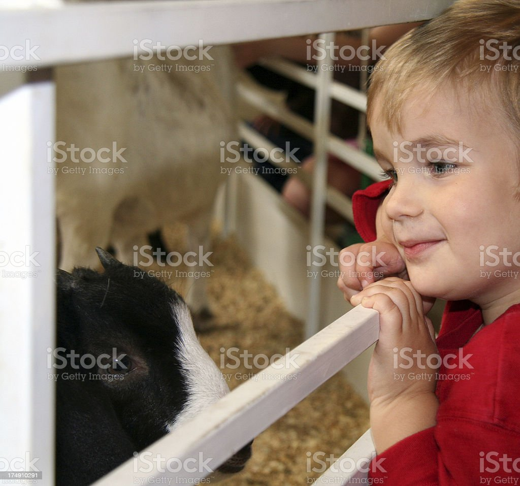 Boy Looking At Animals Through Fence In The Petting Zoo royalty-free stock photo