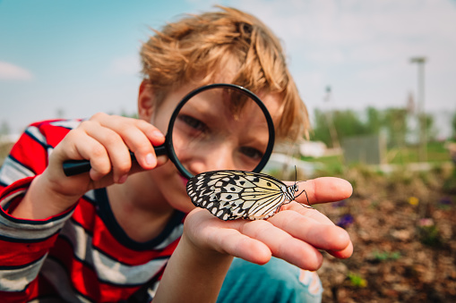 boy looking at butterfy through magnifying glass, kids learning nature