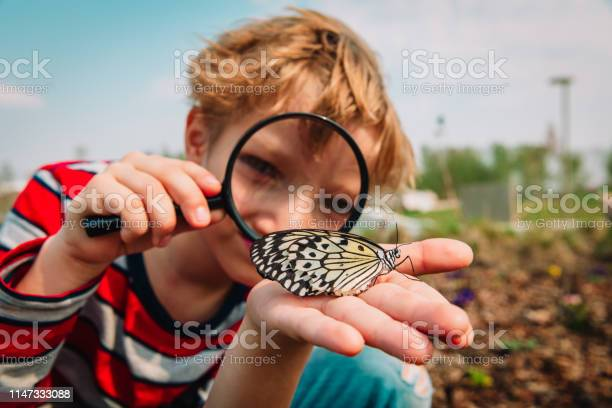 Boy looking at butterfy kids learning nature picture id1147333088?b=1&k=6&m=1147333088&s=612x612&h=gj8kbwmlnejn obalgs84cggnufs03kikxw31wamm0c=