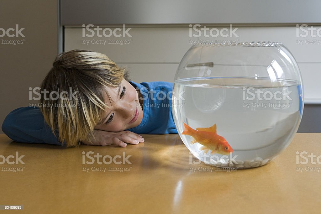 Boy looking at goldfish stock photo