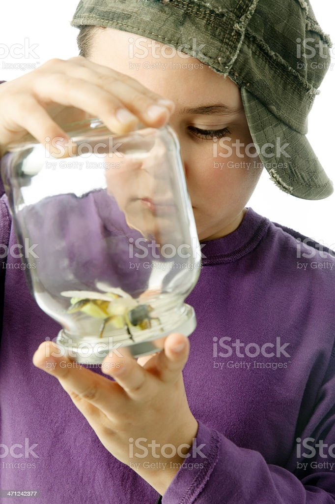 Boy looking big insect. stock photo