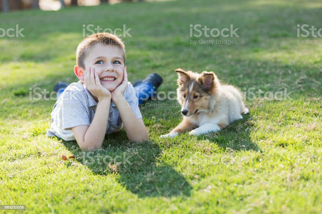 Boy lying on grass with sheltie puppy royalty-free stock photo