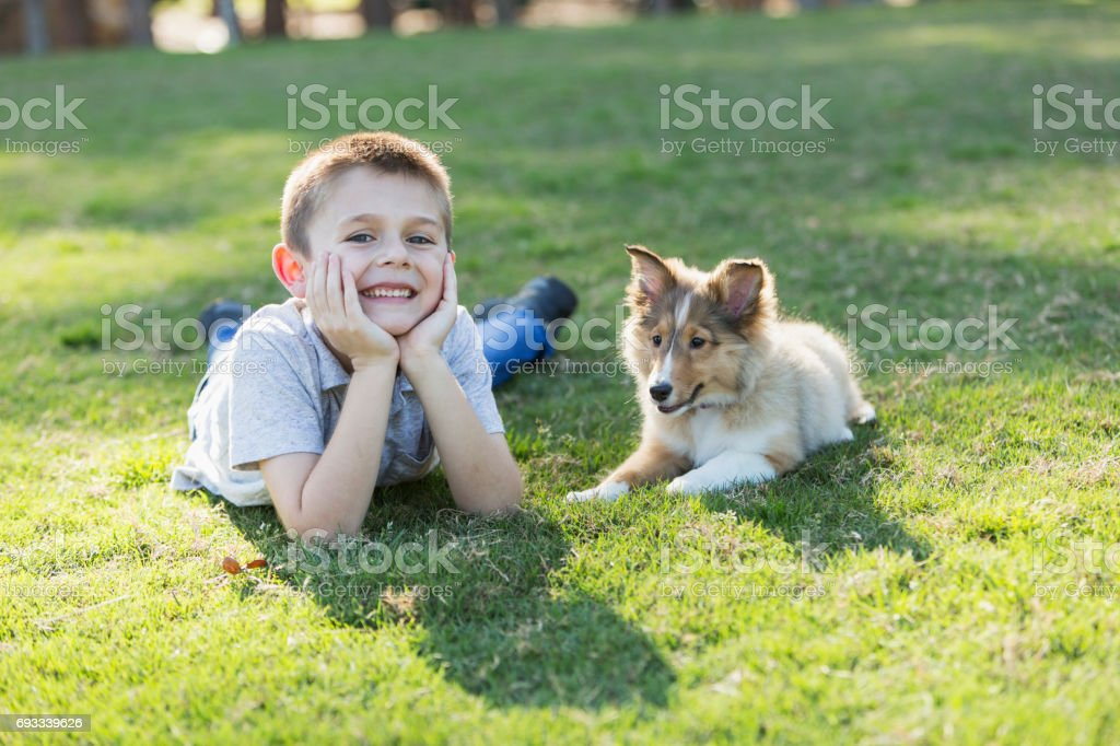 Boy lying on grass with sheltie puppy stock photo