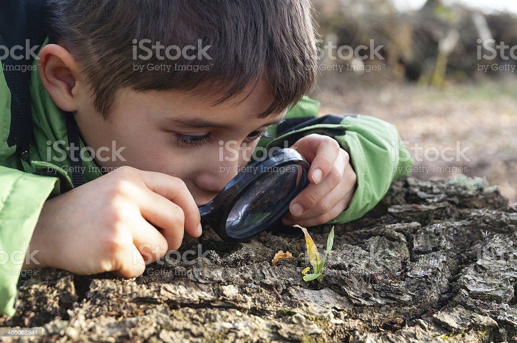 Boy, observed in the forest through magnifying glass, nature stock photo