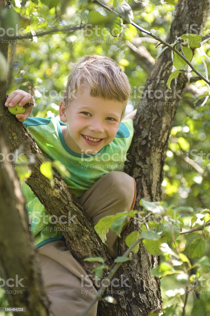 boy on an apple tree royalty-free stock photo