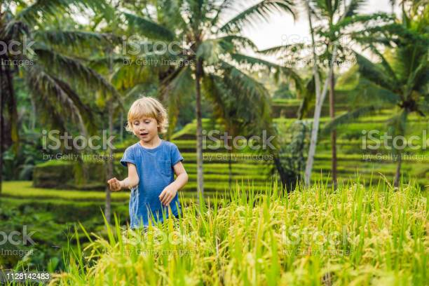 Boy on Green cascade rice field plantation at Tegalalang terrace. Bali, Indonesia Traveling with children concept. Teaching children in practice