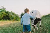 istock Boy petting calf on the meadow 831081808