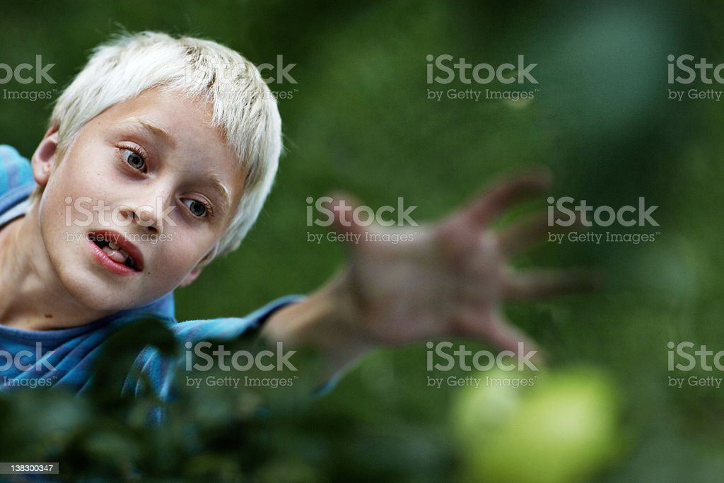 Boy picking fruit in tree stock photo