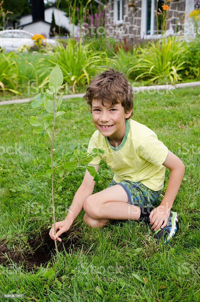 Boy planting a tree on front yard stock photo