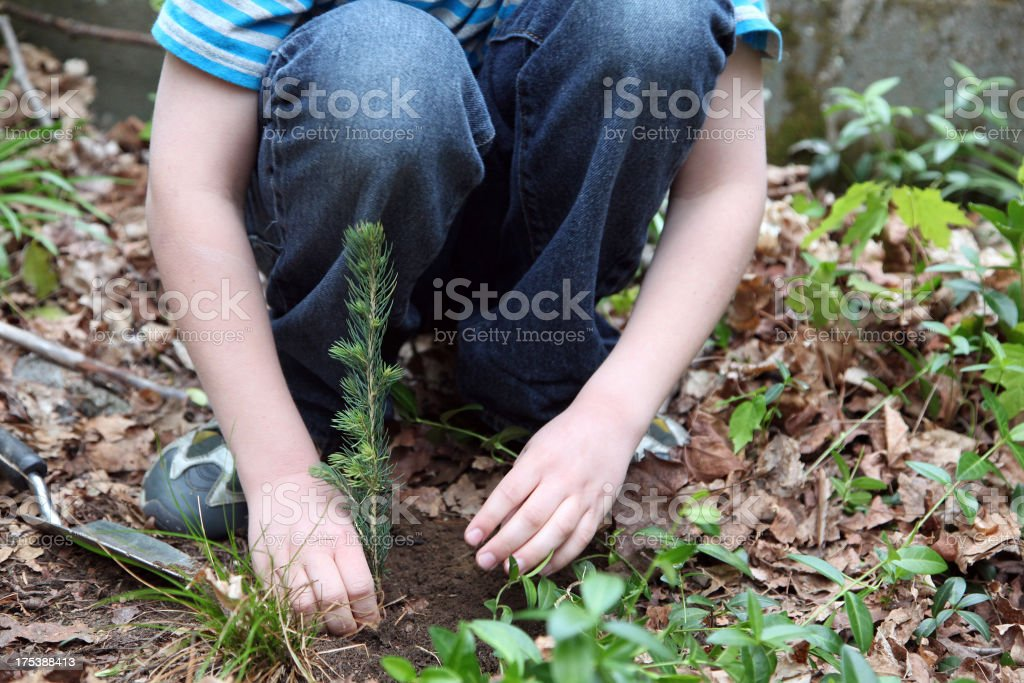 Boy Planting A Tree royalty-free stock photo