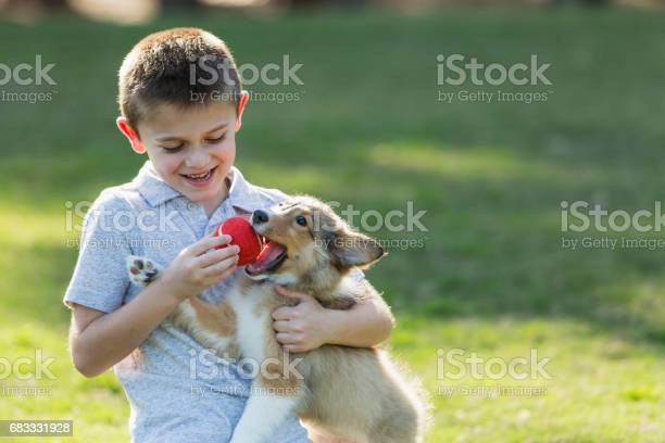 Boy playing fetch with sheltie puppy in park picture id683331928?b=1&k=6&m=683331928&s=612x612&h=airnfyhb2un0nyl yjjxpwz pzpwfir56ecrb nkgta=