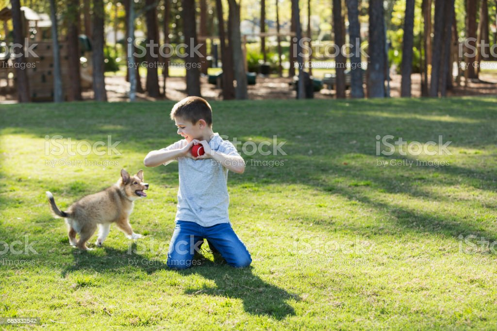 Boy playing fetch with sheltie puppy in park royalty-free stock photo